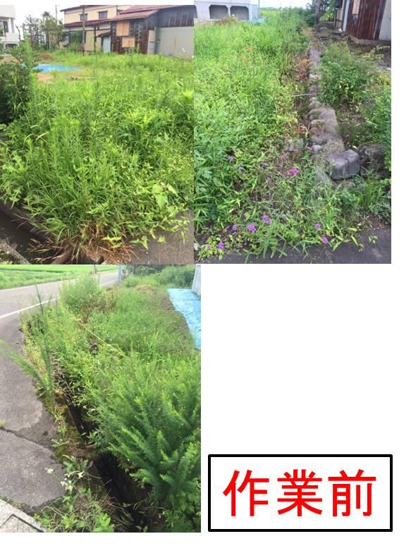 8月2日草刈り画像