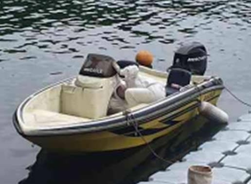 ボートの中に蜂の巣が!