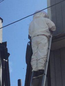 軽井沢にて蜂の巣駆除のご依頼
