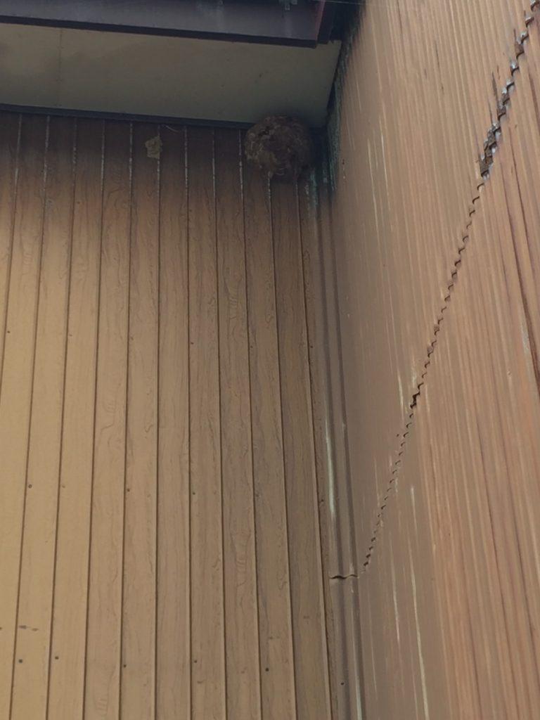 上越市蜂の巣駆除