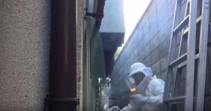 松本で蜂の巣駆除