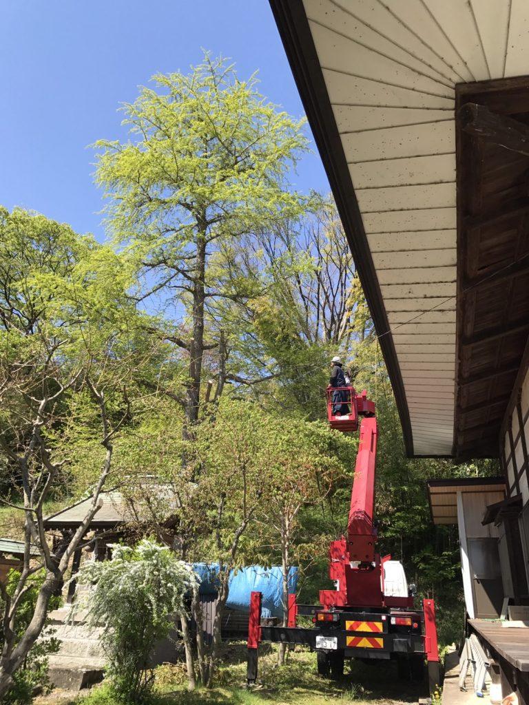 篠ノ井:お寺での伐採1