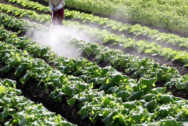 殺虫剤の散布
