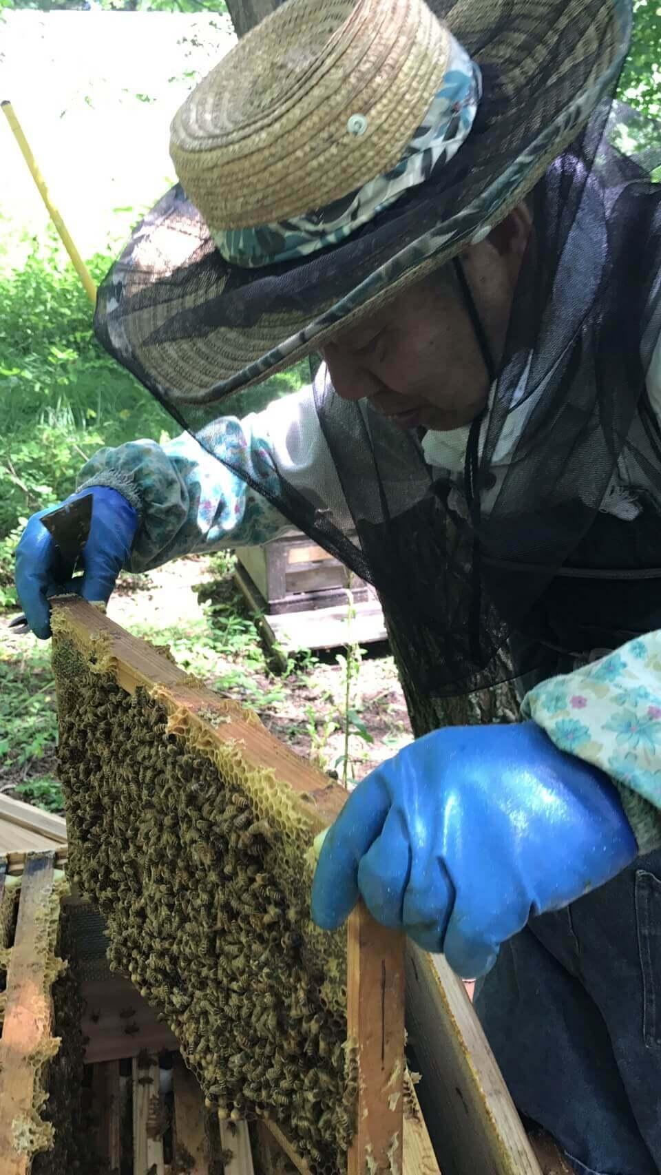 長野市:養蜂所での手伝い2