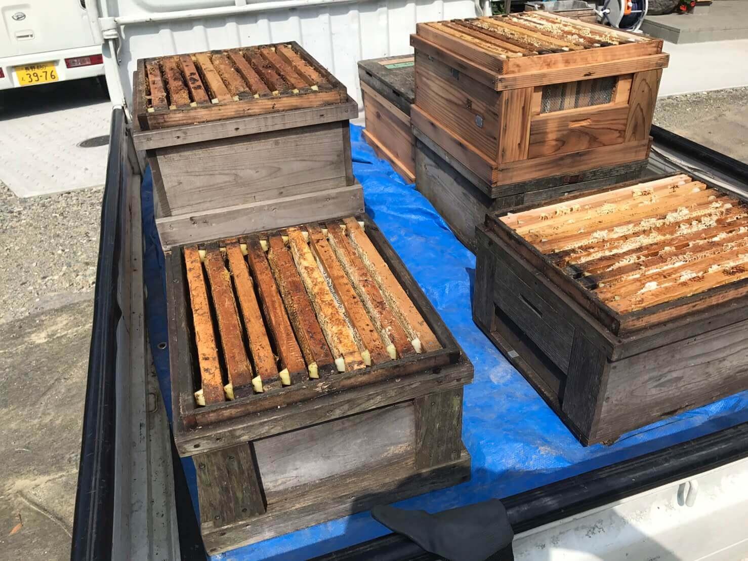 長野市:養蜂所での手伝い1