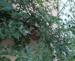 上水内郡信濃町 ハチの巣駆除