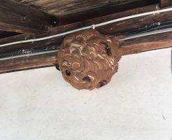 飯山市旭 ハチの巣の駆除1