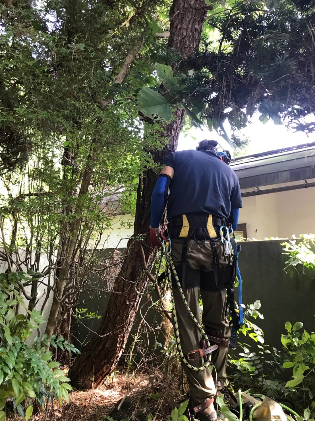 長野市安茂里 木の枝の伐採2
