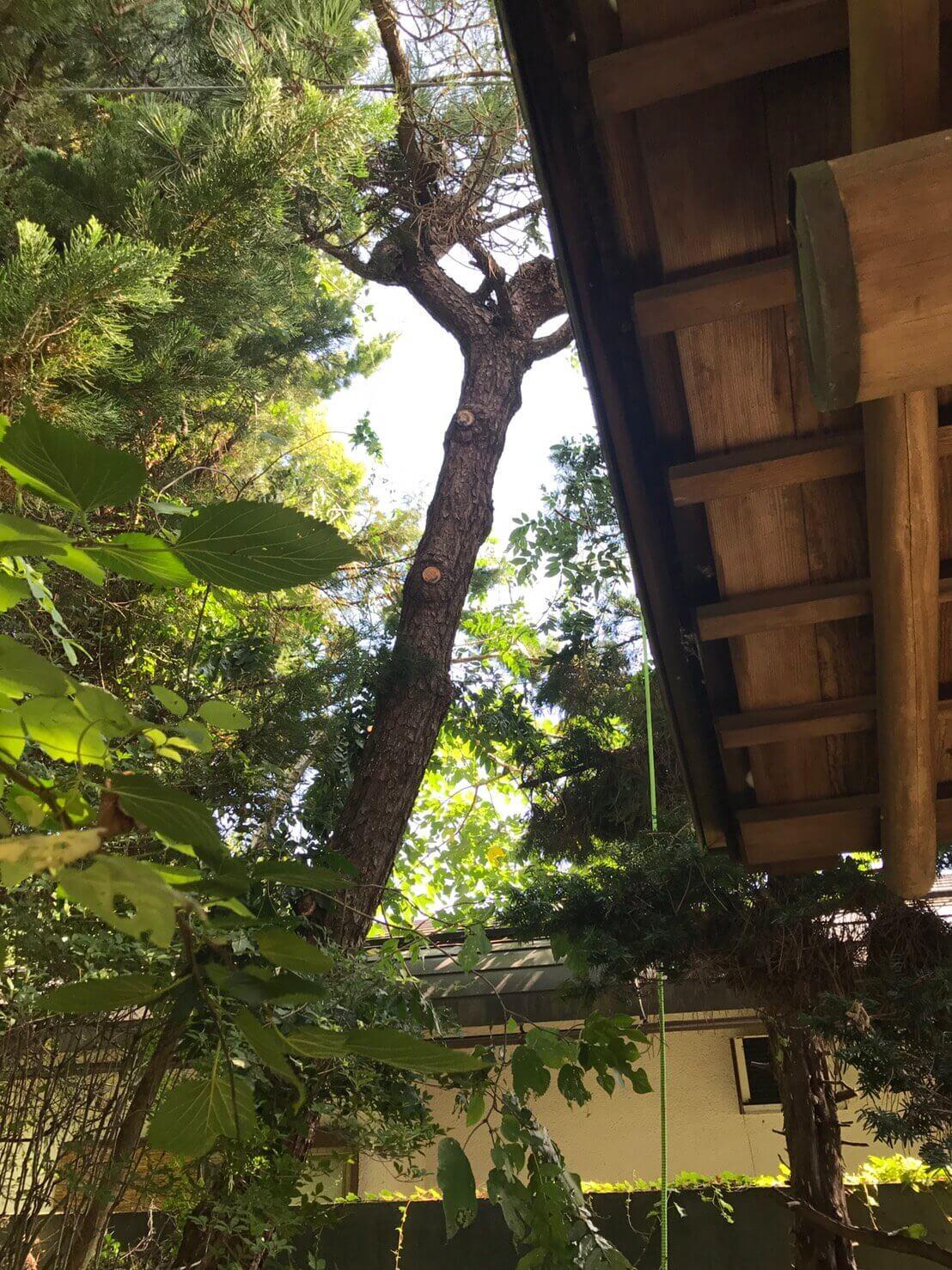 長野市安茂里 木の枝の伐採3