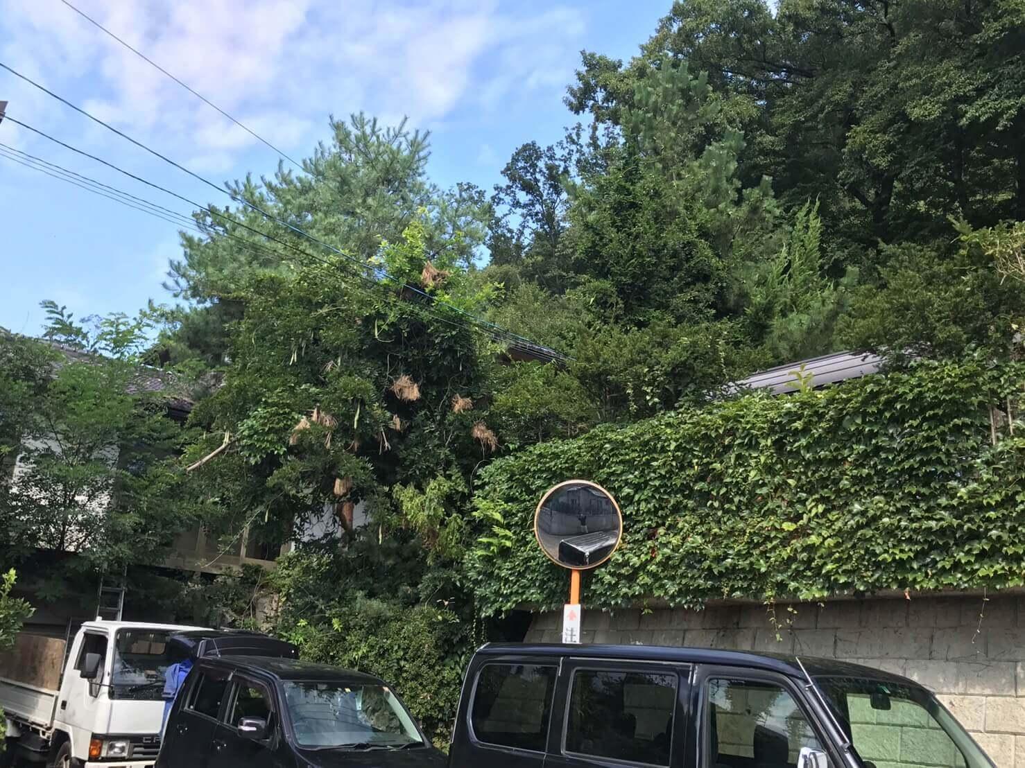長野市安茂里 木の枝の伐採1