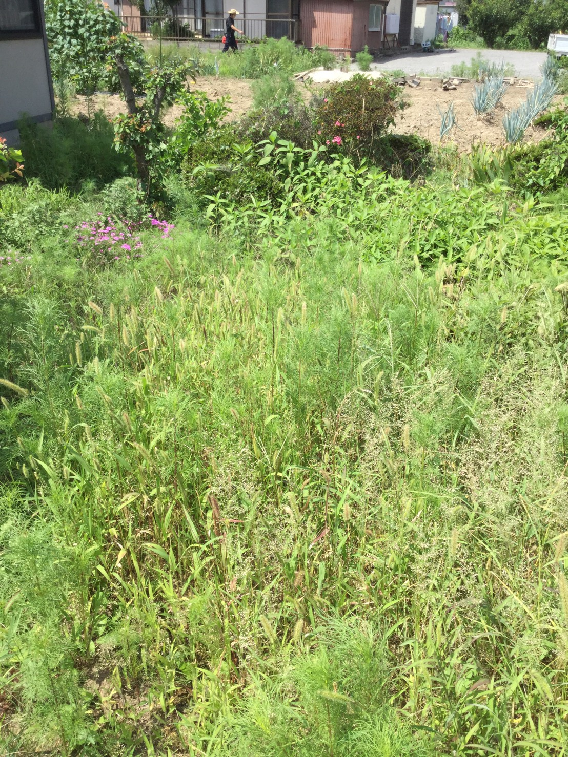千曲市小島 リピーター様の草刈り1