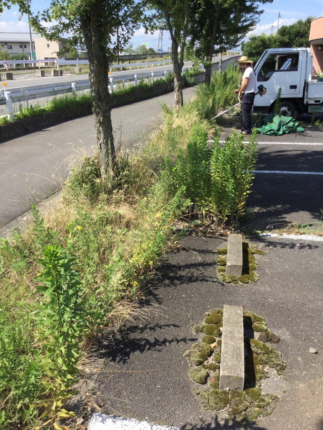 長野市大豆島 草刈りと伐採3