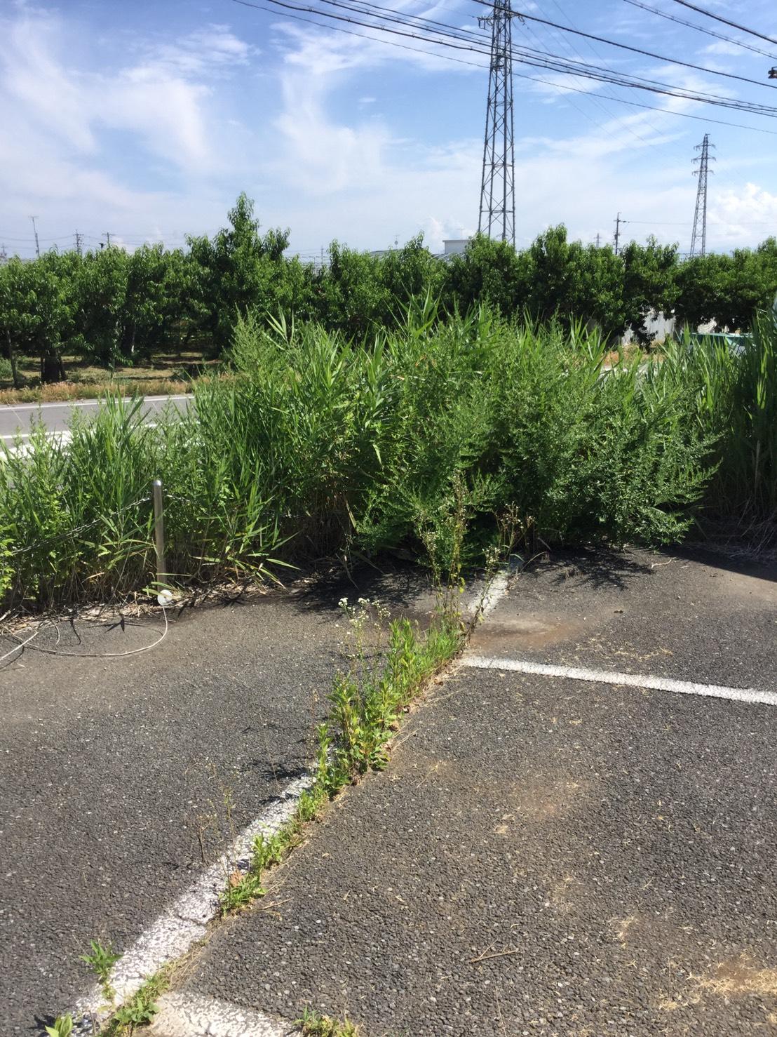 長野市大豆島 草刈りと伐採1