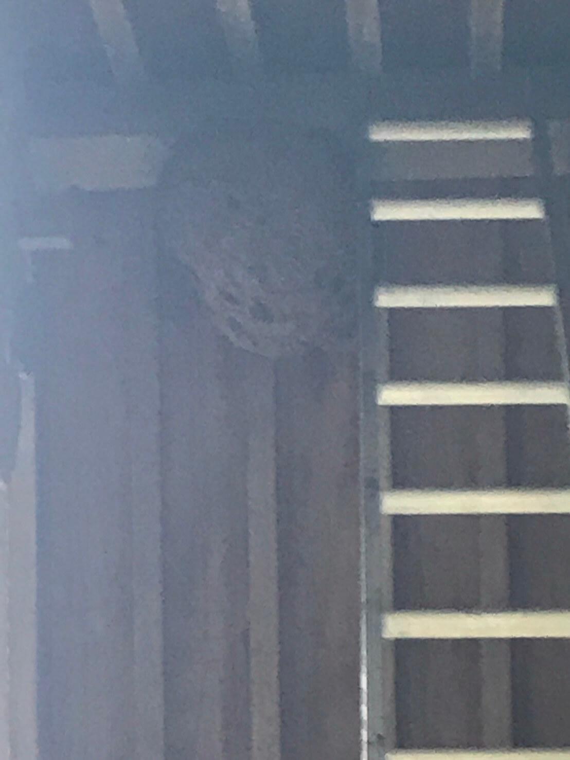 長野市若穂綿内 ハチの巣駆除1