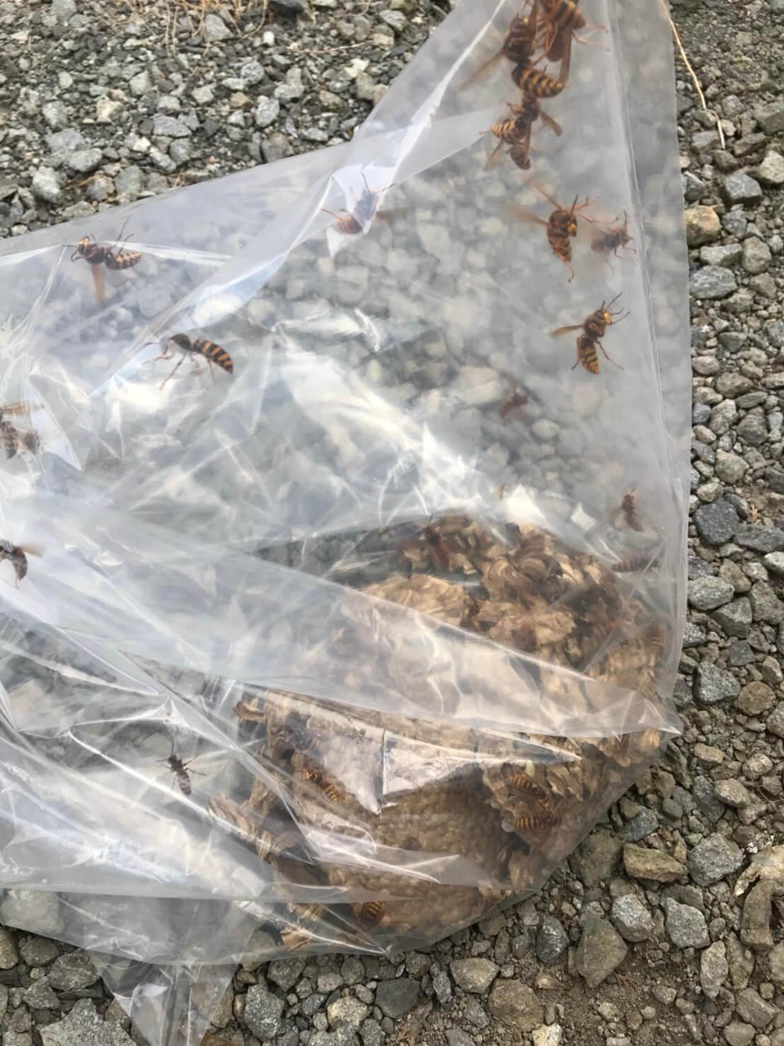 長野市永江でのハチの巣駆除2