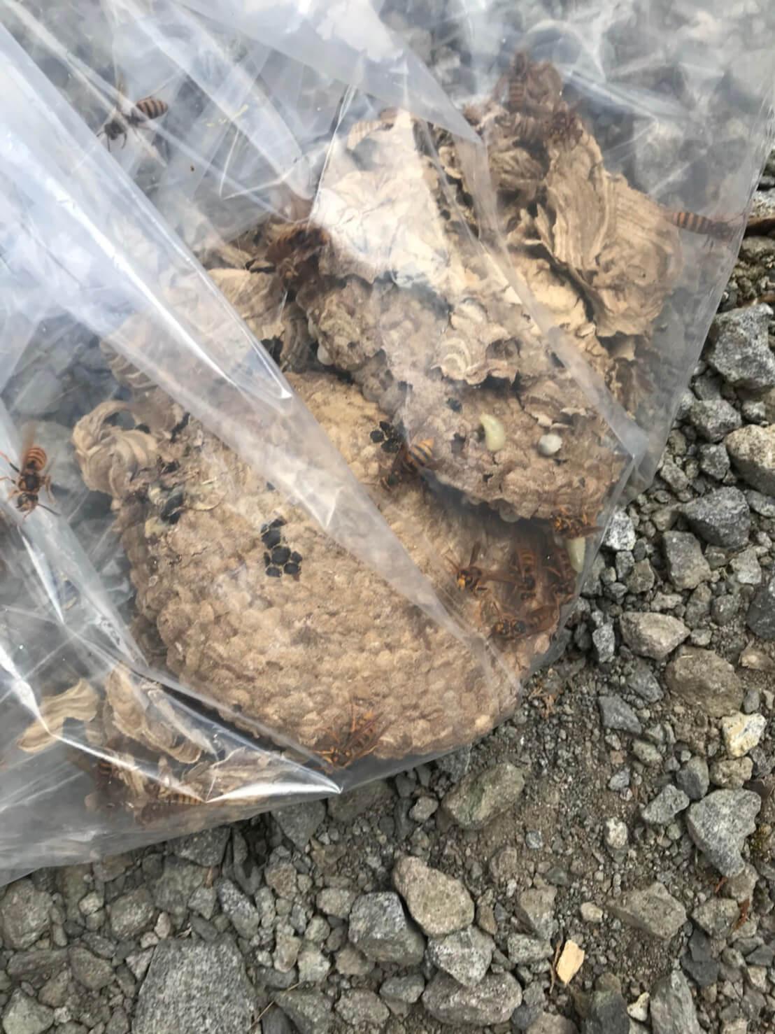 長野市永江でのハチの巣駆除1