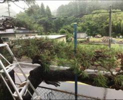 上田市での松の木の剪定5