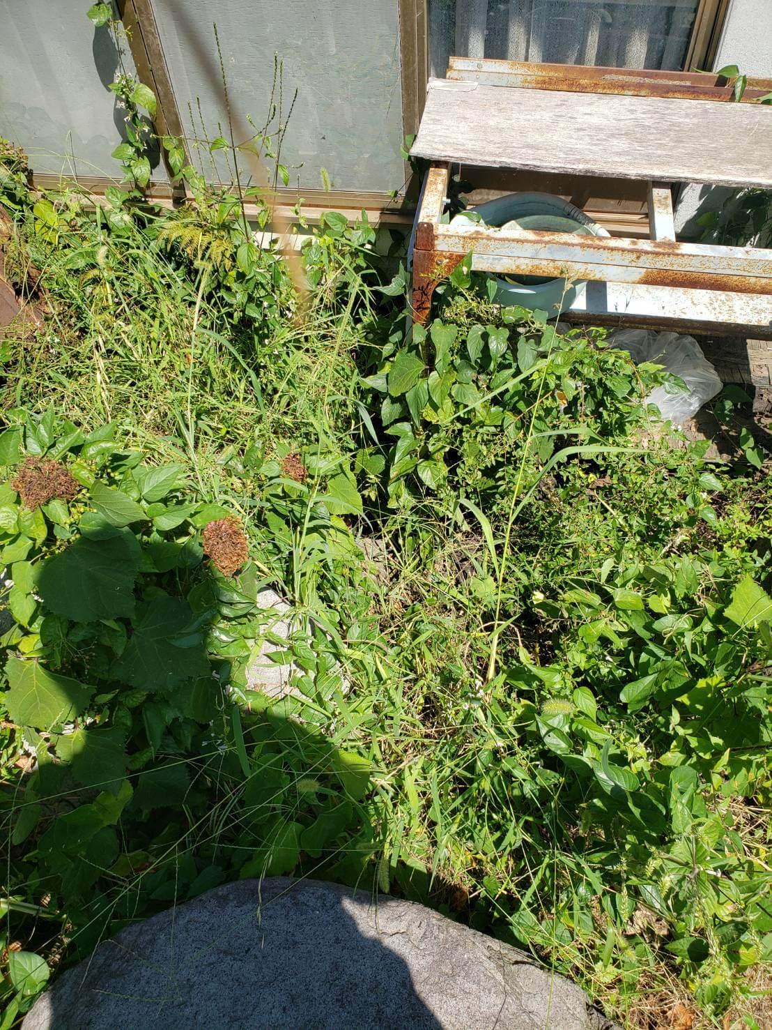 長野市手刈りでの草刈り作業2
