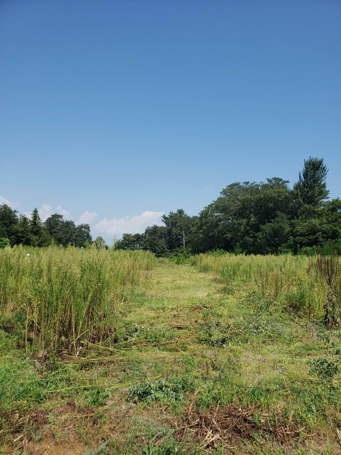 南信地域3000坪の草刈り2