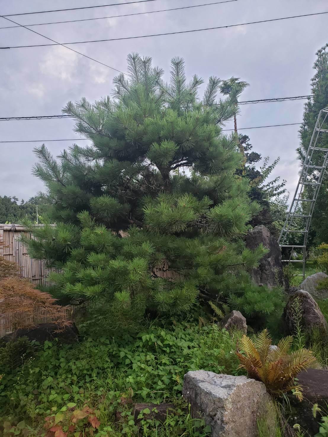 2020年8月30日:北信地域での草刈り・庭木の剪定3