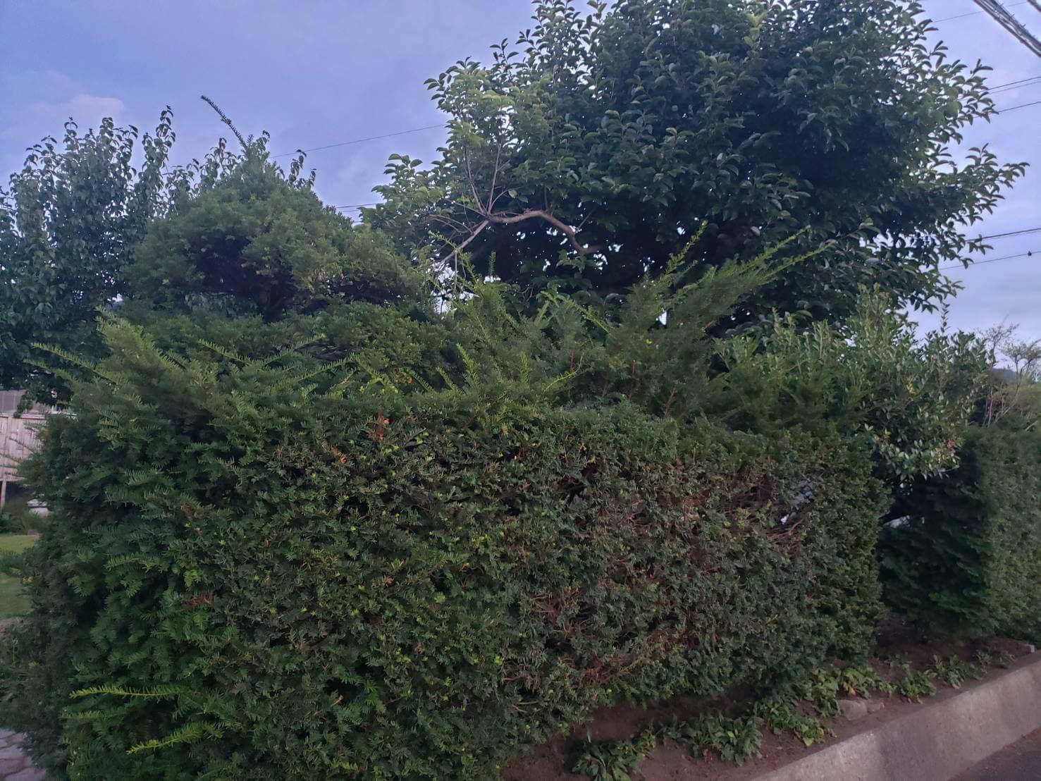 2020年8月30日:北信地域での草刈り・庭木の剪定4