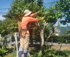 2020年8月30日:北信地域での草刈り・庭木の剪定5