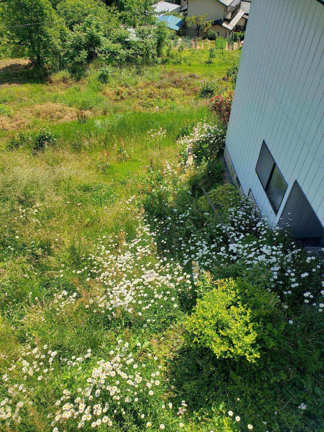 2021年5月31日東信地域草刈り1