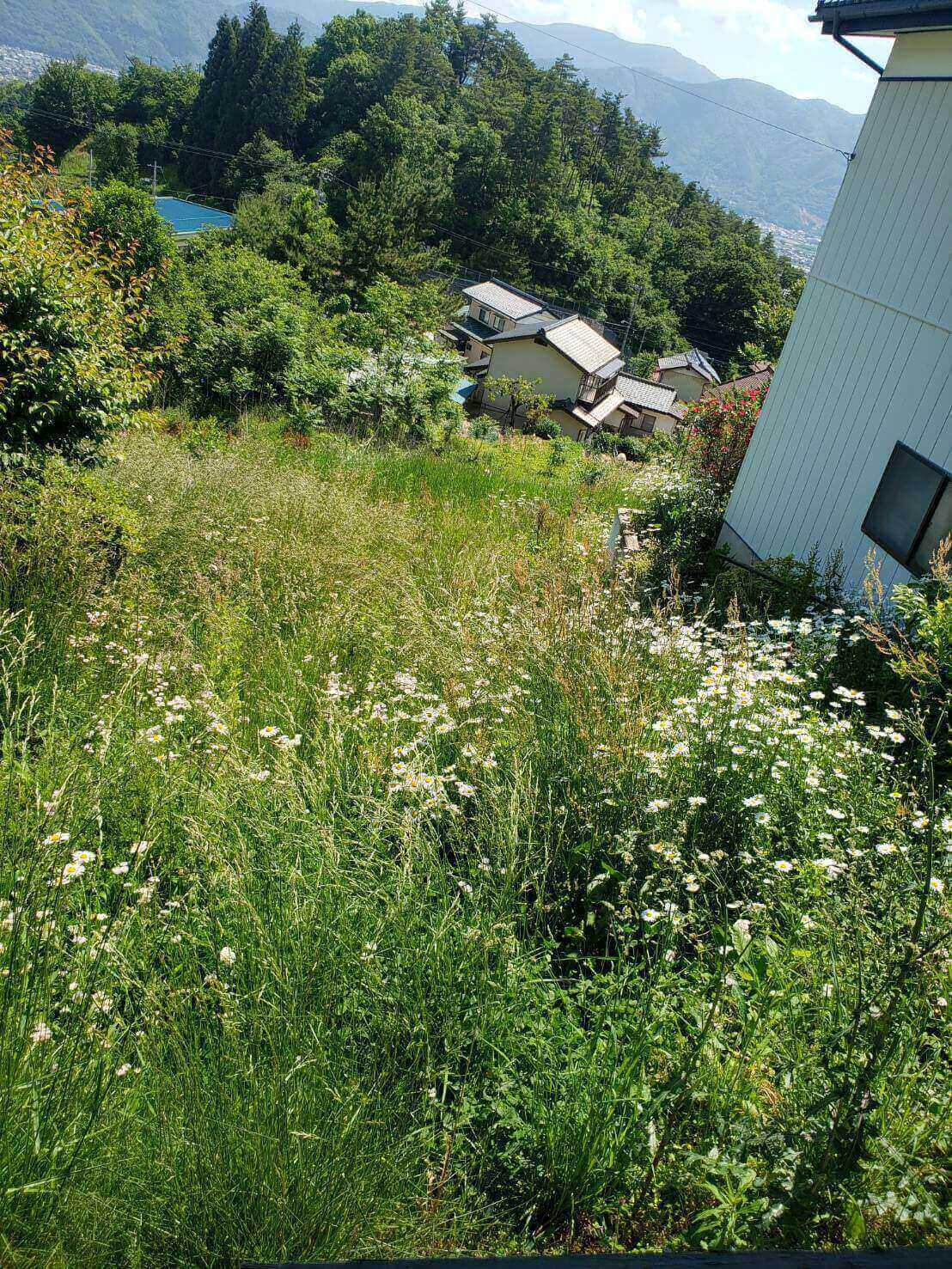 2021年5月31日東信地域草刈り3