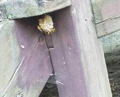 2021年7月26日上田市ハチの巣駆除1